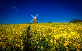 Windmill, yellow rapeseed flowers