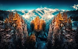 Winter, trees, snow, mountains, art style