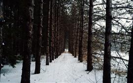 Inverno, árvores, neve branca, inverno
