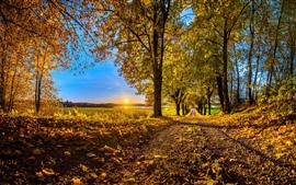 Preview wallpaper Autumn, trees, golden leaves, path, sunrise