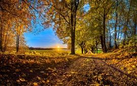 Outono, árvores, folhas douradas, caminho, nascer do sol