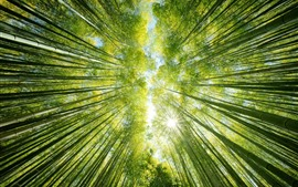 Preview wallpaper Bamboo forest, green, sun rays, from bottom view