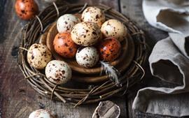 Vorschau des Hintergrundbilder Vogeleier, Nest