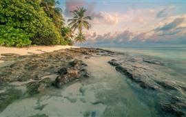 Costa, mar, palmeiras, nuvens, natureza