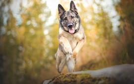 Cachorro pulando, fundo nebuloso