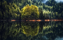 Forest, trees, lake, water reflection, morning