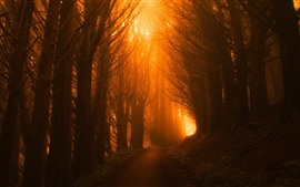 Preview wallpaper Forest, trees, path, sun rays, fog, morning