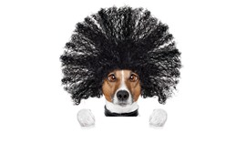Preview wallpaper Funny dog, hairstyle, white background