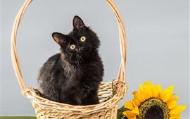 Пушистый черный котенок, корзина, подсолнечник
