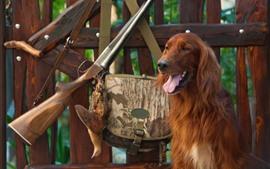 Furry brown dog, gun