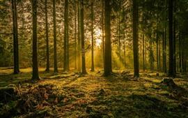 Alemanha, árvores, raias do sol, brilho, natureza