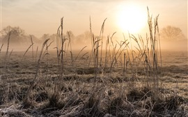 Grass, sunrise, fog, morning, hazy