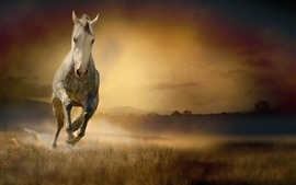 Aperçu fond d'écran Cheval courant, vue de face, herbe, brouillard, matin