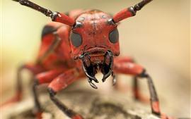Macrophotographie d'insecte, tête, bouche, antennes
