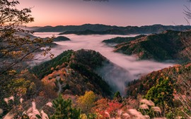 Preview wallpaper Japan, Shiga Prefecture, road, hills, trees, fog, morning