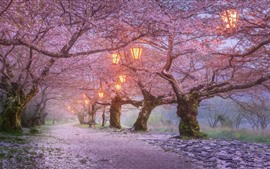 Preview wallpaper Japan, sakura blossom, lanterns, spring