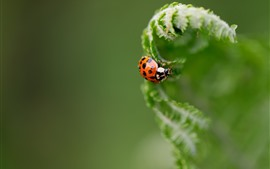 Preview wallpaper Ladybug, plants