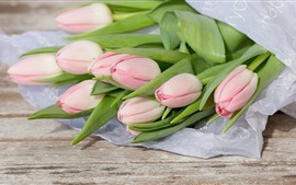 Light pink tulips, bouquet