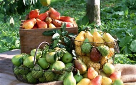 Preview wallpaper Many pears, fruit, harvest