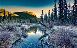 Preview wallpaper Morning, trees, frost, creek, nature landscape