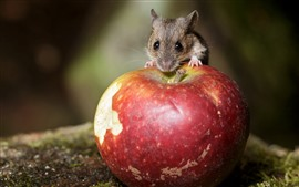 Mouse e maçã vermelha