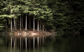 Naturaleza arboles lago