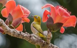 Um pássaro e duas flores cor de rosa
