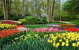 미리보기 배경 화면 공원, 많은 튤립, 나무, 봄