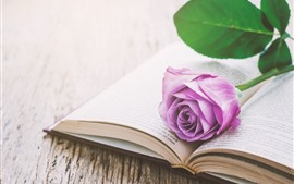 Preview wallpaper Pink rose, book, still life