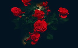 Red roses, darkness, leaves