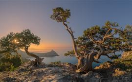 Rússia, criméia, mar, árvores, costa, manhã, nevoeiro, sol, raios