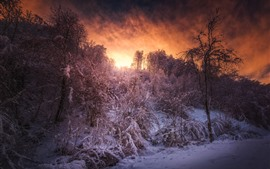 Neve, árvores, céu, nuvens, pôr do sol, inverno