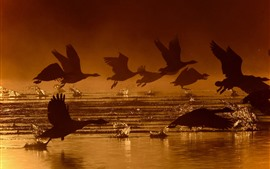 Preview wallpaper Some birds flight, wings, water splash, silhouette