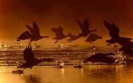 Some birds flight, wings, water splash, silhouette