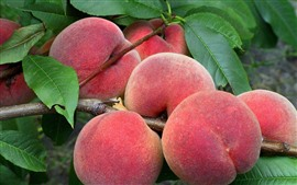 Preview wallpaper Some red peaches, ripe fruit