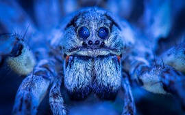Preview wallpaper Spider macro photography, eyes, blue style