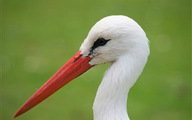Preview wallpaper Stork, head, neck, beak
