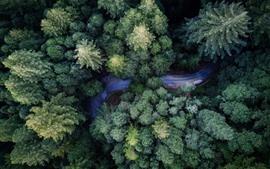 Vista de cima, floresta, estrada, natureza