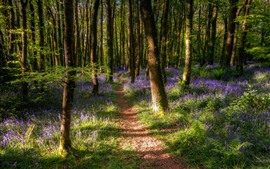 Trees, forest, purple wildflowers, spring