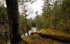 Aperçu fond d'écran Arbres, rivière, nuages, paysage de la nature