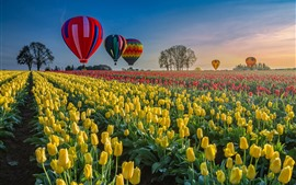 Tulips field, hot air balloon