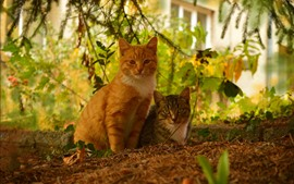 Two cats, bushes