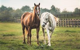 Dois cavalos, branco e marrom
