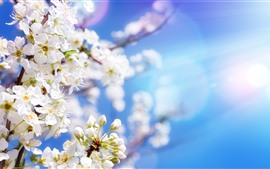 Preview wallpaper White apple flowers, blossom, spring, sun rays