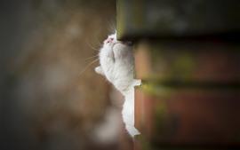 Gato blanco toma la cabeza hacia arriba, pared, brumoso