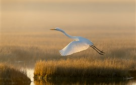 Preview wallpaper White egret, flight, grass