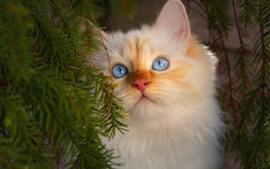 Белый пушистый котенок, лицо, взгляд, глаза