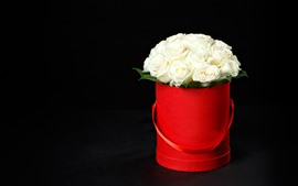 White roses, red bucket