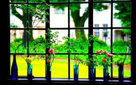 Janela, rosas, flores, vaso
