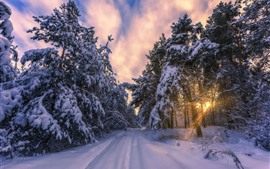 Preview wallpaper Winter, morning, snow, trees, sun rays, path